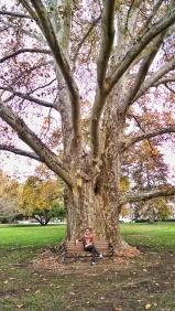 Front Courtyard Oak Tree